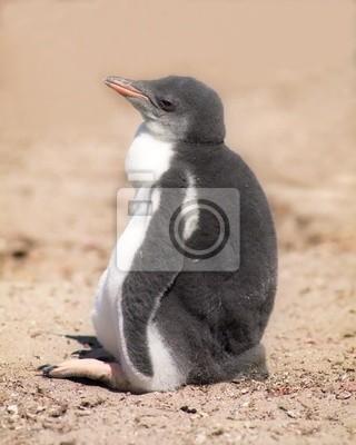 Chick king penguin