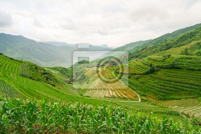 Chinese rice fields