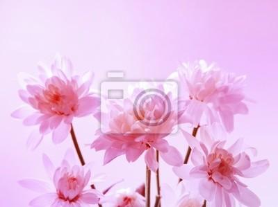 Wall mural Chrysanthemum