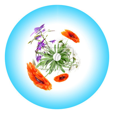 circle from wild flowers and blue sky on a white background