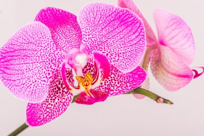 Wall mural Close-up of orchid blossom