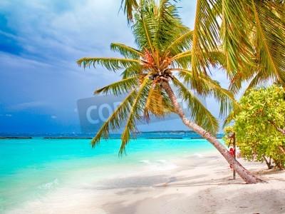 Wall mural Coconut palm beach