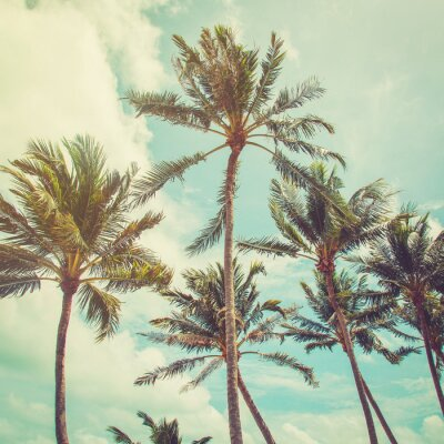 Wall mural coconut palm tree and blue sky clouds with vintage tone.