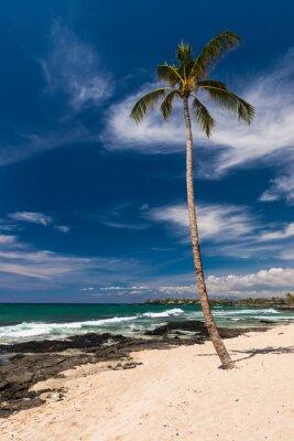 Wall mural Coconut Palm Tree at a Hawaiian Beach, Big Island