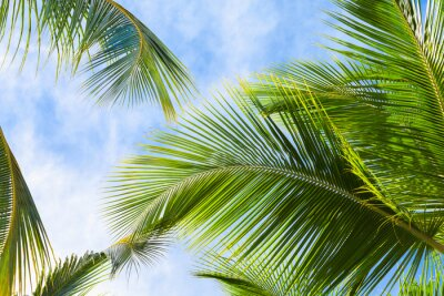 Wall mural Coconut palm tree leaves