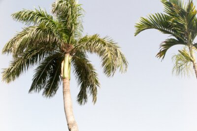 Wall mural Coconut tree and blue sky in summer beach