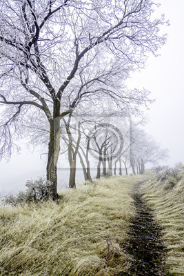 Wall mural Cold fog morning with trees and a trail