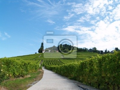 colline, azure a vignoble
