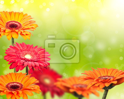colored gerbera on green blurred background