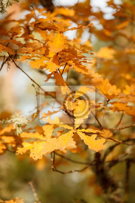 Colorful autumn leaves on tree