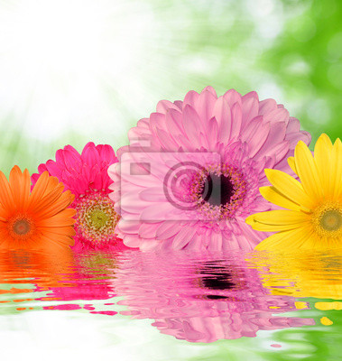 colorful gerberas on green natural background