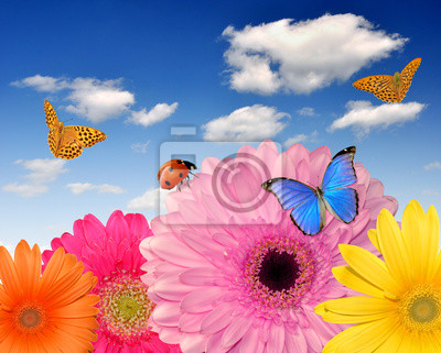 colorful gerberas with butterflies and ladybugs