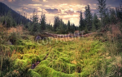 Wall mural Colorful summer sunrise in the magic forest with huge carpet of green moss