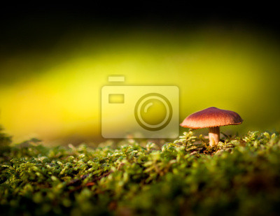 Wall mural Colorful view of a mushroom and moss