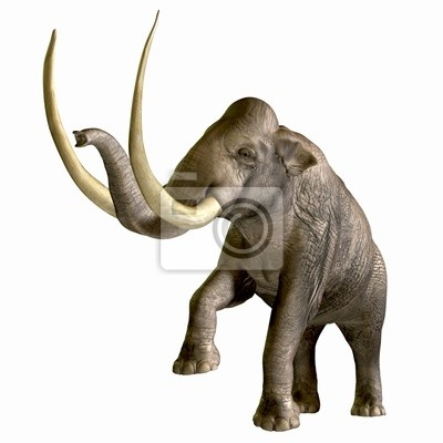 Columbian Mammoth 01