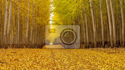 Wall mural Country road leads through an autumn forest