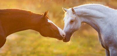 Couple of horses portrait at sunlight