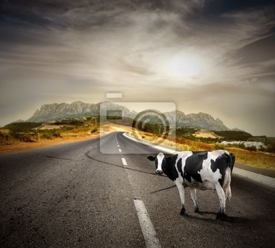 cow on a street