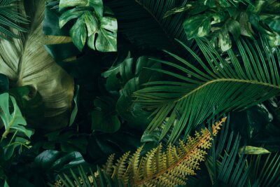 Wall mural Creative layout made of tropical leaves. Flat lay. Nature concept.
