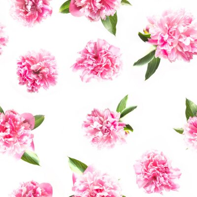Wall mural Creative seamless pattern of pink peony flower on white. Minimal flat lay. Top view.