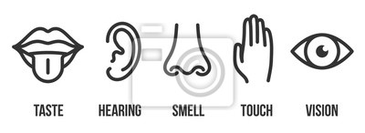 Wall mural Creative vector illustration line icon set of five human senses. Vision, hearing, smell, touch, taste isolated on transparent background. Art design nose, eye, hand, ear, mouth with tongue element