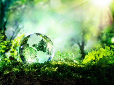 Wall mural crystal globe on moss in a forest - environment concept