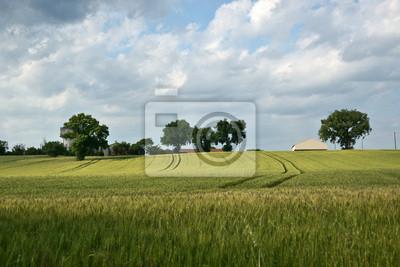 Wall mural culture de blé