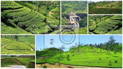 Wall mural Culture de thé
