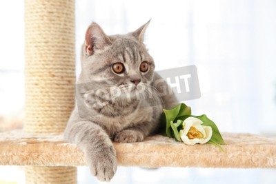 Wall mural Cute cat lying on claw sharpener with tulip in light room