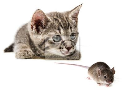cute little kitten catching a mouse
