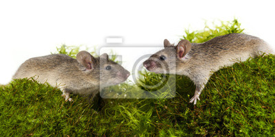 cute little mice on a green moos close up