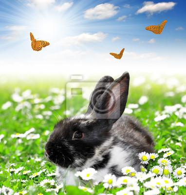Cute Rabbit with butterflies in grass