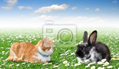 cute rabbit with cat