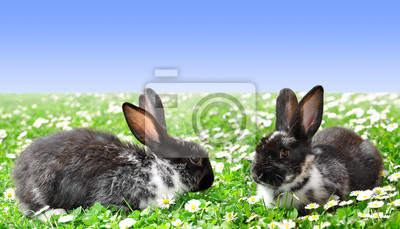 Cute Rabbits in Grass