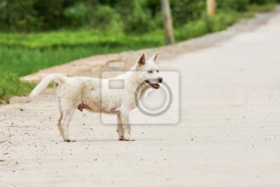 Wall mural Cute white puppy in asia