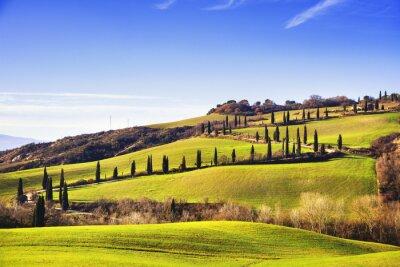 Wall mural Cypress trees scenic road. Siena, Tuscany, Italy.