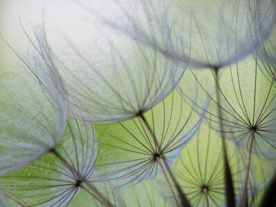 Wall mural dandelion seed