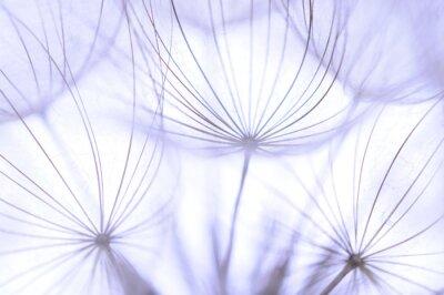 Wall mural dandelion seeds