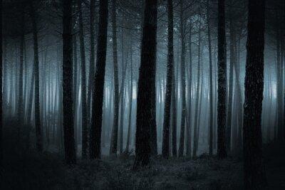 Wall mural Dark foggy forest