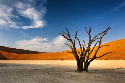 Wall mural Dead tree in Sossusvlei, in the Namib Desert, Namibia