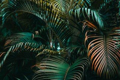 Wall mural Deep dark green palm leaves pattern. Creative layout, horizontal