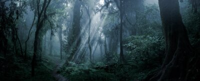 Wall mural Deep tropical forest in darkness