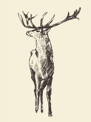 Wall mural Deer Engraving, Vintage Illustration, Vector
