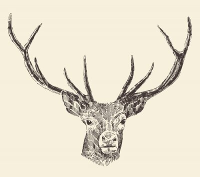 Wall mural Deer Head Vintage Illustration, Hand Drawn, Vector