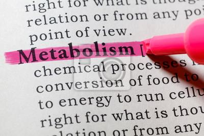 definition of metabolism