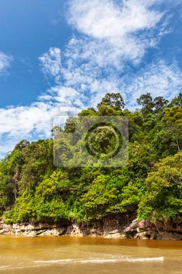 Dense jungle and blue sky