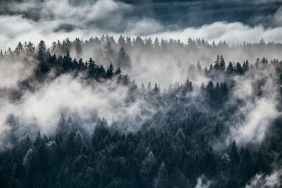 Wall mural Dense morning fog in alpine landscape with fir trees and mountains.