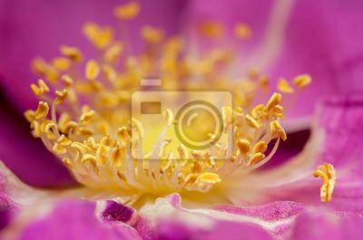 detail of yellow roses pistil