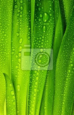 dewy leaves background