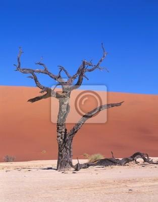 Wall mural Died tree in desert